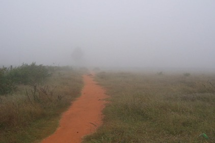 Foggy path-424473_1280